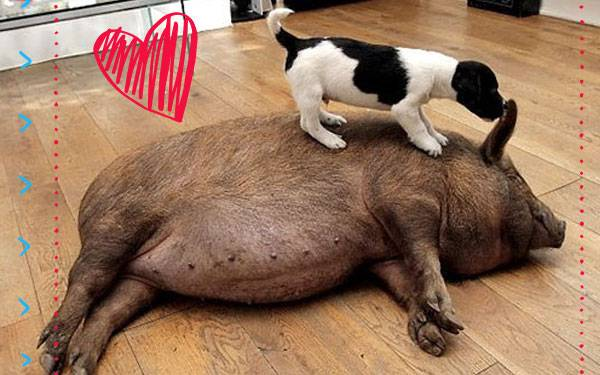 "17 Animal ""Odd Couples"" That are Way Cuter than Oscar and Felix"