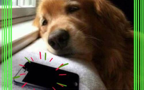 Mobile Mutt: Texting your dog while stuck at a holiday gathering