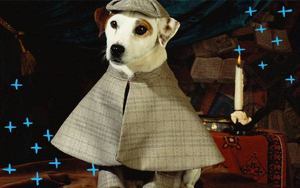 9 Animal Actors With Better Careers than Most Human Actors