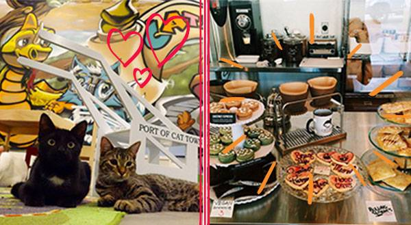 Cat Cafes: Come for the Coffee, Stay for the Kitties