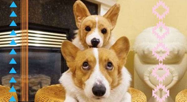 9 Pets With Their Cuddle Clone Twins