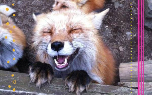 The Fox Says... Check Out This Japanese Fox Village