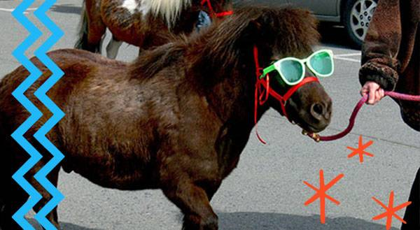 No Horsing Around - These Are The BEST Service Animals Ever