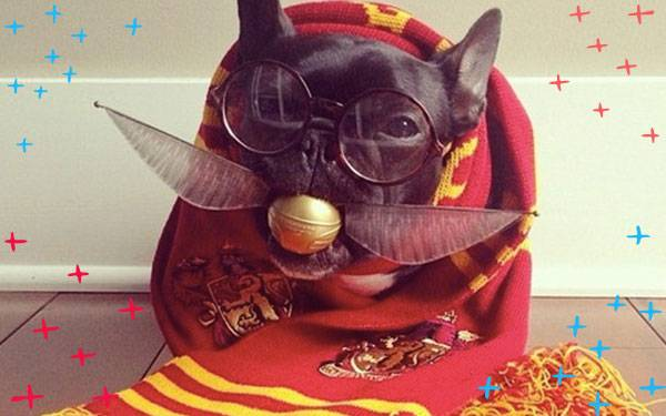 9 Potter Pets You Wish You Could Have in Real Life