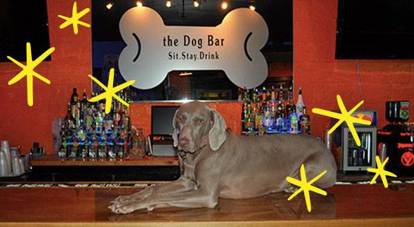 Bone Appétit: 9 Awesome Dog-Friendly Restaurants