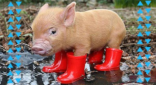 It's Raining Cats & Dogs! 11 Pets in their Cutest Rain Gear
