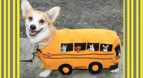 11 Pets That Get an A+ on Back to School Readiness