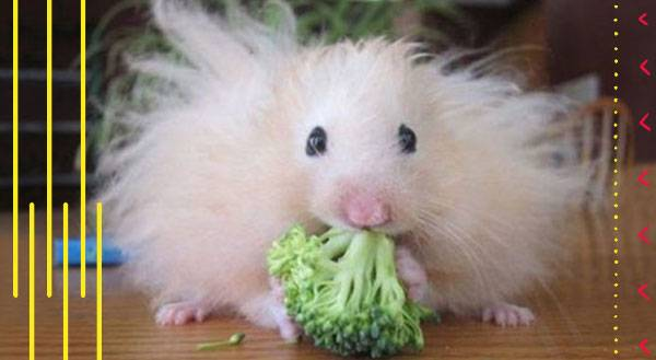11 Animals That Are Having a Bad Hair Day