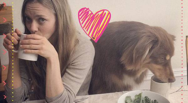 Lights, Cell Phone, Action: 13 Celebrity Pet Selfies