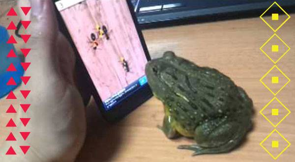 WATCH: Frog Wins at iPhone Game, Loses at Sportsmanship!