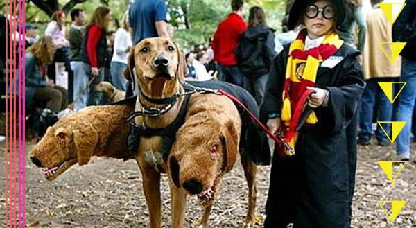 Top 10 Pet Halloween Costumes for 2015