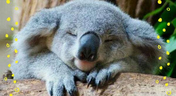 7 Ways Koalas Have It Better Than You