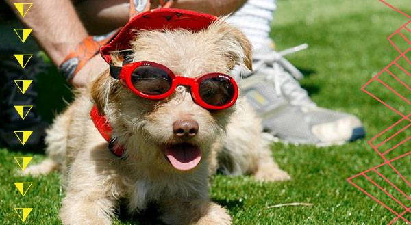 7 Pets Rocking Shady Summer Styles