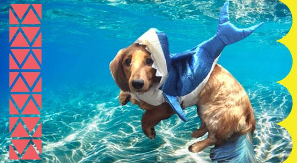 11 Pets That Are Ready for Sharknado 3