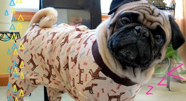 8b4f6b020 All for Onesies! 13 Adorable Pets in Pajamas - Freak 4 My Pet