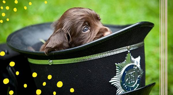 "Police Puppies Who Put The ""Aw!"" in Law Enforcement"
