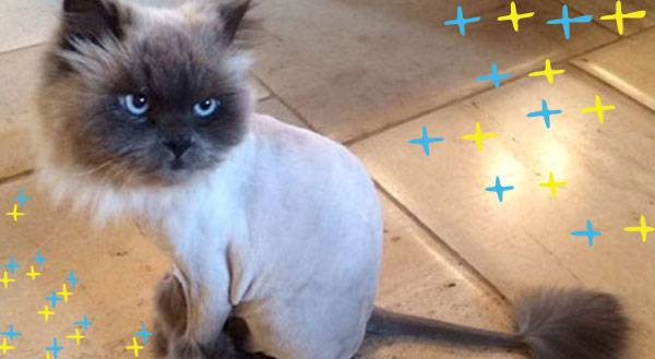 Trend Alert: Catscaping For Summer is a THING!
