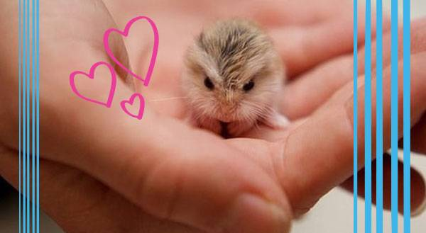 Tiny Pets that Will Make Your Life So Much Bigger