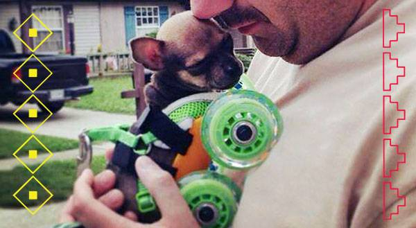 9 Times Turbo Roo the 2-Legged Chihuahua Stole Our Hearts