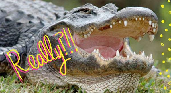 WATCH: Man Feeds Gators From His Mouth, Laughs at Death!