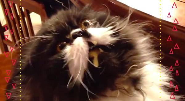 Warm Weather Warning: Cats Get Brain Freeze Too [VIDEO]