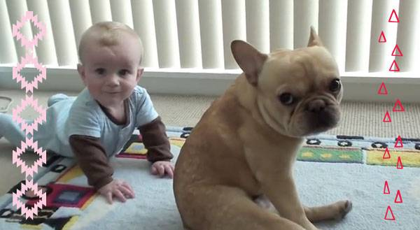 Baby & Bulldog are BFFS… Did Your Ovaries Just Explode, Too? [VIDEO]