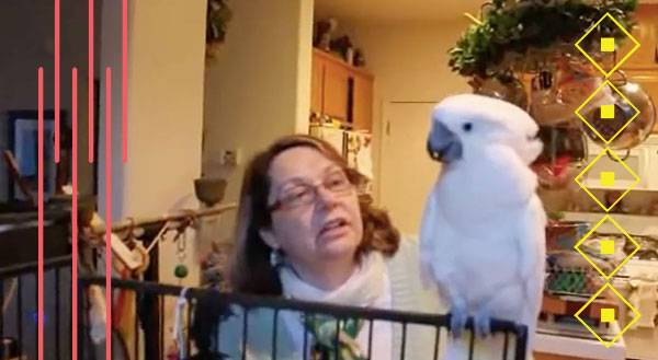 WATCH: Cockatoo Spits Mad Sass At Her Human!