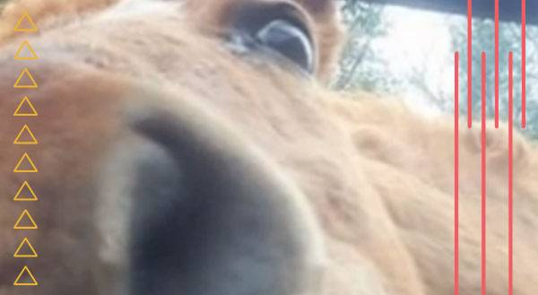 If Ryan Gosling Were a Horse… [VIDEO]