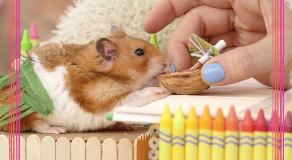 Watch This Tiny Hamster Throw Down Coconut Mixers Like a BOSS
