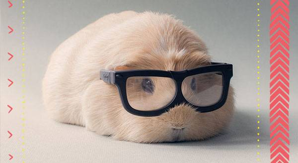 11 Pets That Rock Outrageous Eyewear