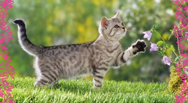 11 Reasons Why Indoor/Outdoor Cats Make Annoying Pets
