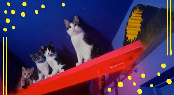 How 9 Cat Lovers Turned Their Homes into Epic Cat Playgrounds