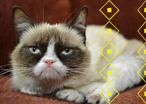 Quiz: Which Famous Internet Cat Are You?