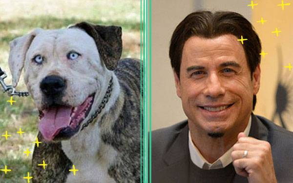 13 Dogs Who Look Exactly Like Celebrities