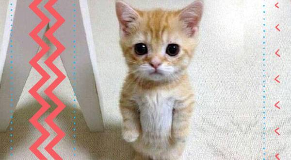 11 Cats Desperate to Understand The Standing on Two Legs Thing