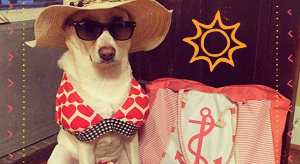 These 9 Pets Prove that Any Body Can Be Bikini Ready