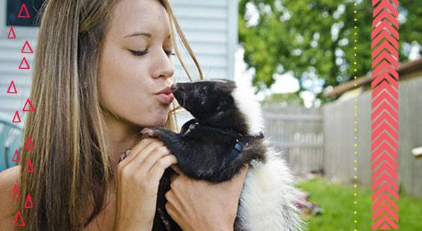 9 Reasons Skunks Don't Stink as Pets