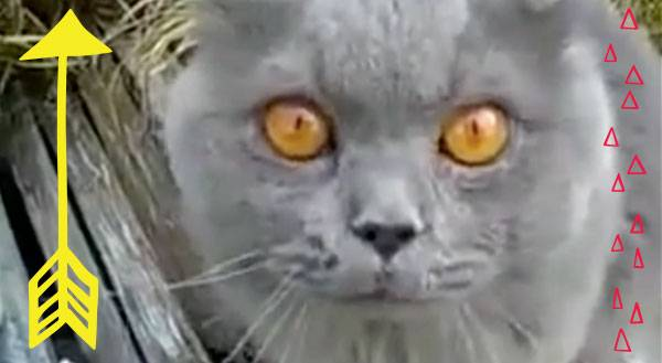 Philosopher Cat Wonders What It All Means [VIDEO]
