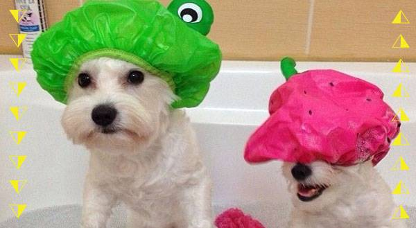 These 9 Pets are Ready for Bath Time...Well, Some of Them are!